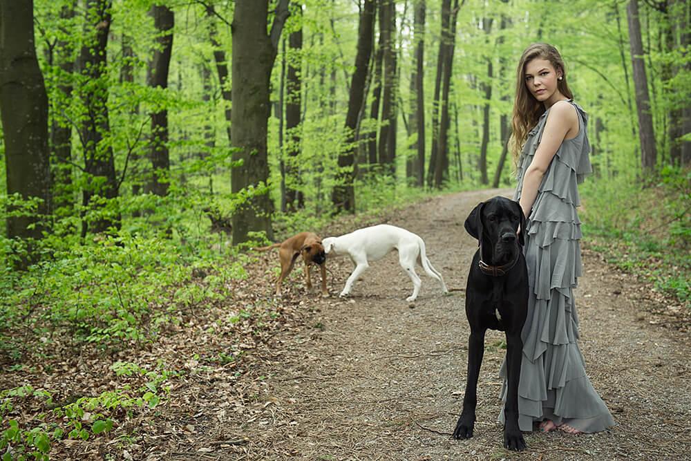 lena, hunde, boxer, dogge, wald, romantisch, frühling, fotografie, niederösterreich, ursula schmitz