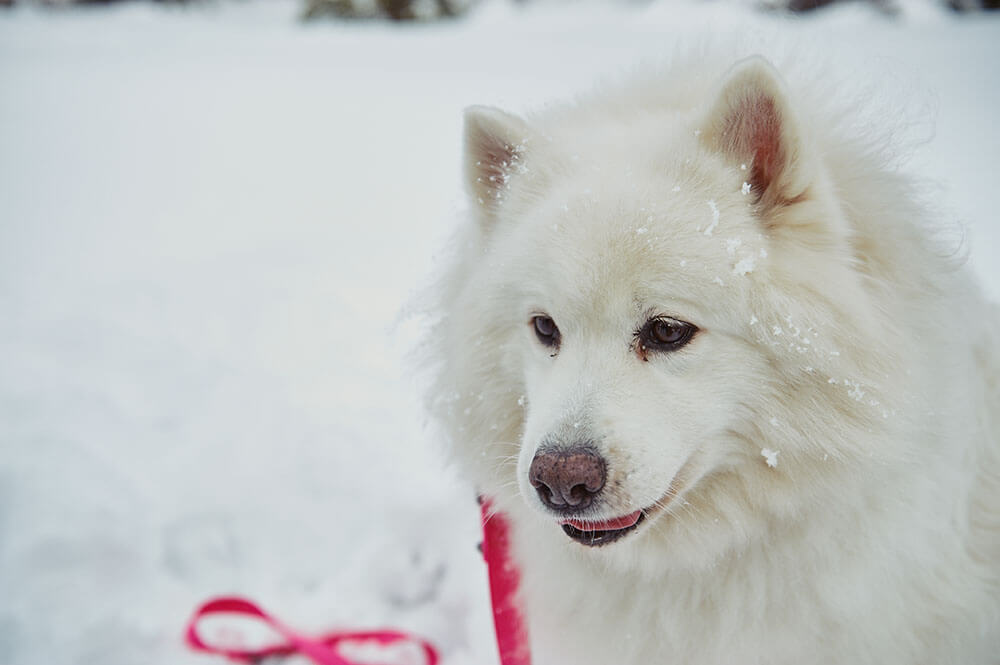 ursula schmitz, photography, portrait, destination photographer, switzerland, dogs, snow, winter wonderland, mountains